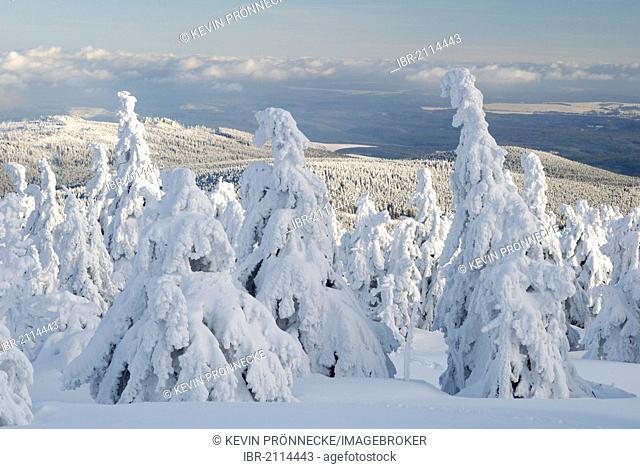 Winter landscape on Brocken mountain, Harz, Saxony-Anhalt, Germany, Europe