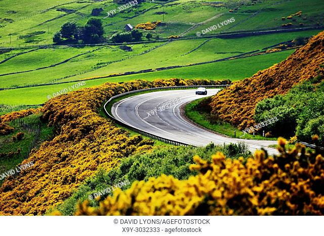 A9 main trunk road climbs 2 miles north of Helmsdale, Sutherland on Scotlands N. E. coast. Looking south over early summer yellow gorse and farmland