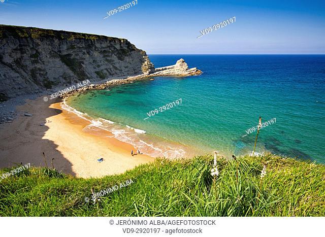 Meadow of green grass and flowers. Langre beach, Ribamontan al Mar, Trasmiera coast. Cantabrian Sea. Cantabria Spain. Europe