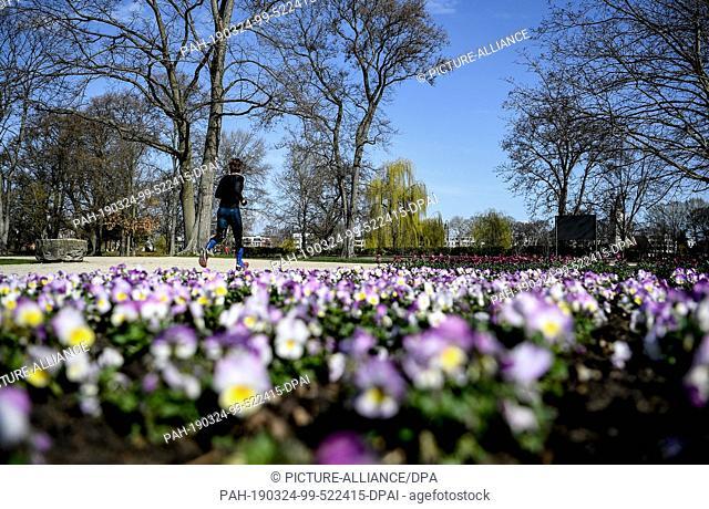 24 March 2019, Berlin: A jogger walks past flower beds in Treptower Park. Photo: Britta Pedersen/dpa-Zentralbild/dpa. - Berlin/Berlin/Germany