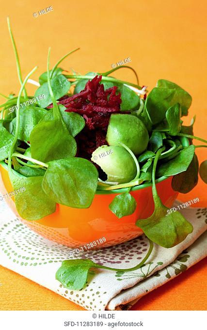 Purslane salad with avocado and beetroot