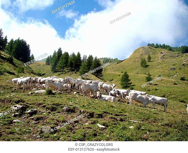 Pasture on Col de Tende 7