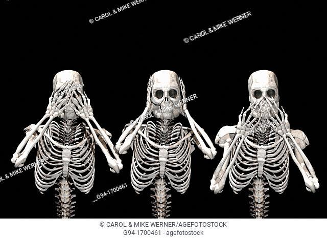 A trio of skeletons see no evil, hear no evil, speak no evil
