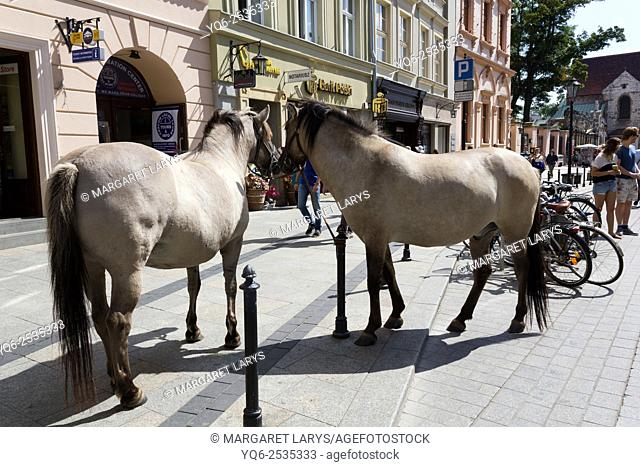 Horses in the streets in Krakow, old historical city in Poland, Europe