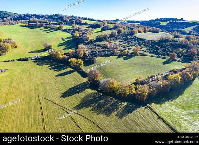 Farmland and deciduous trees. Aerial view. Navarre, Spain, Europe