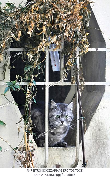 Montmartre, Paris, France, cat at a window