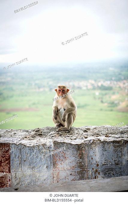 Monkey crouching on dilapidated rock wall