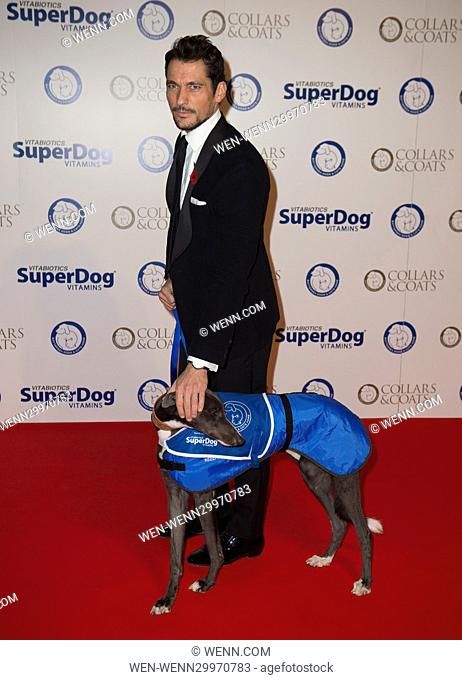 Battersea Dogs and Cats Home's Annual Collars and Coats Gala on November 3rd 2016 in London, United Kingdom Featuring: David Gandy Where: London