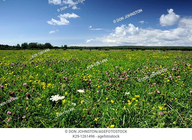 Pasture with late-summer wildflowers