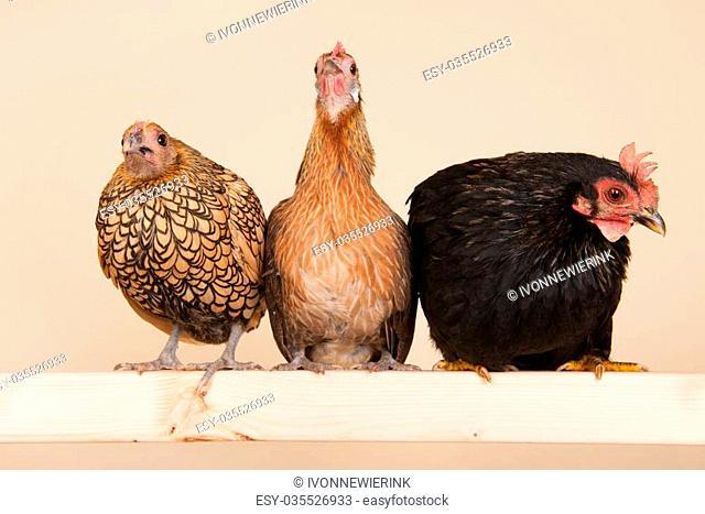Three different chicken on stick in studio