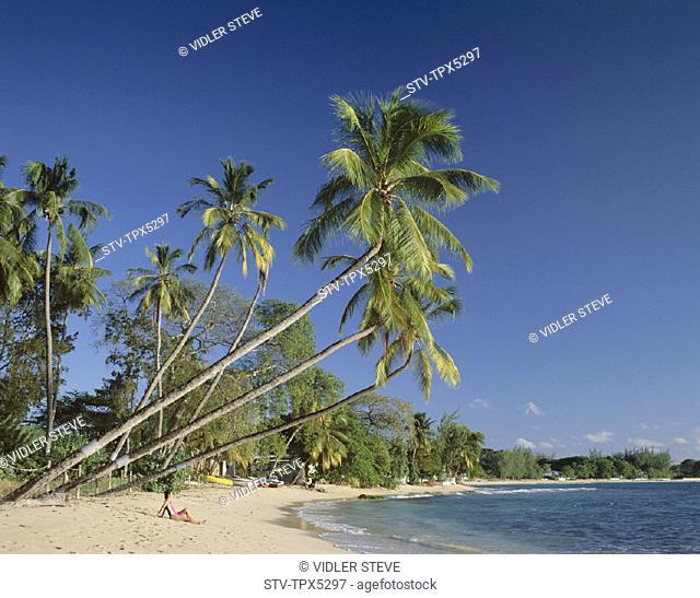 Barbados, Caribbean, Holiday, Islands, Kings beach, Landmark, Palm trees, Sand, Sea, Tourism, Travel, Vacation