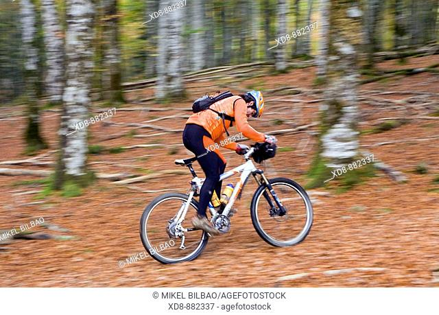 cyclist on a mountain bike croosing a beech forest.Irati Natural Reserve, West Pyrenees county, Navarre, Spain, Europe