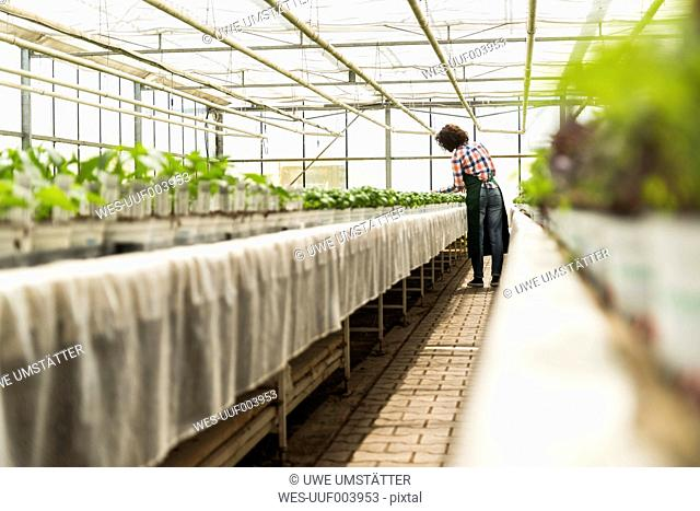 Young female gardener working in plant nursery