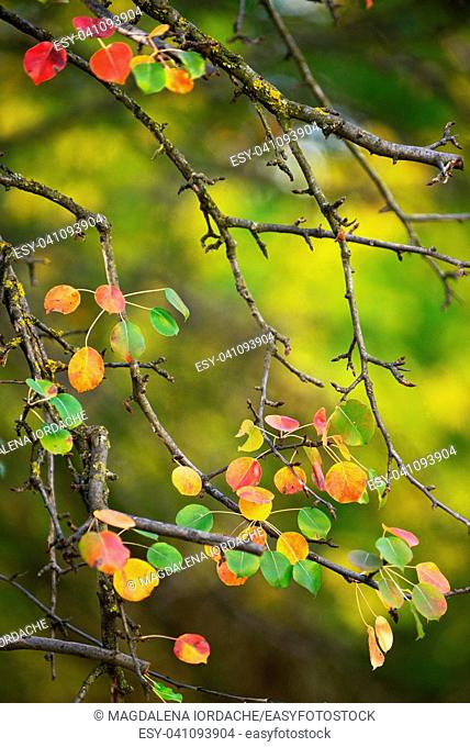 Autumn brunch with pear leaves in garden