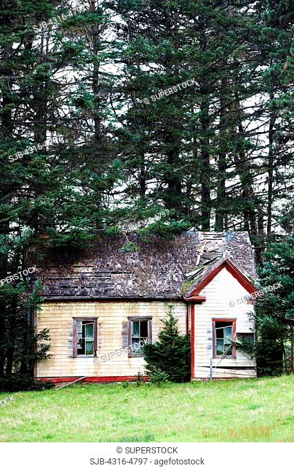 Abandoned house in trees, northern coast of California