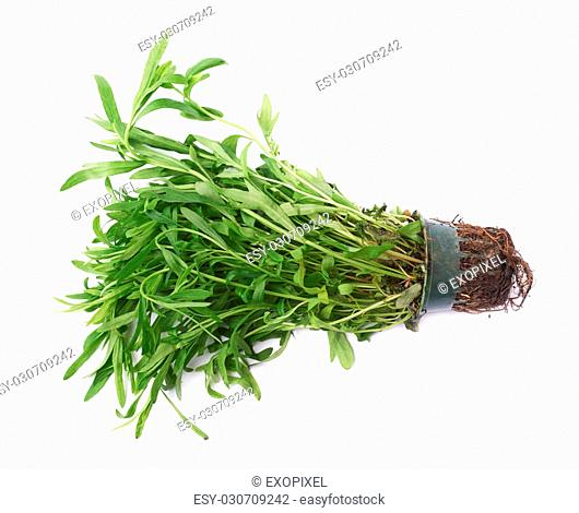 Branch of Tarragon Artemisia dracunculus perennial aromatic culinary herb leaves lying on its side, isolated over the white background