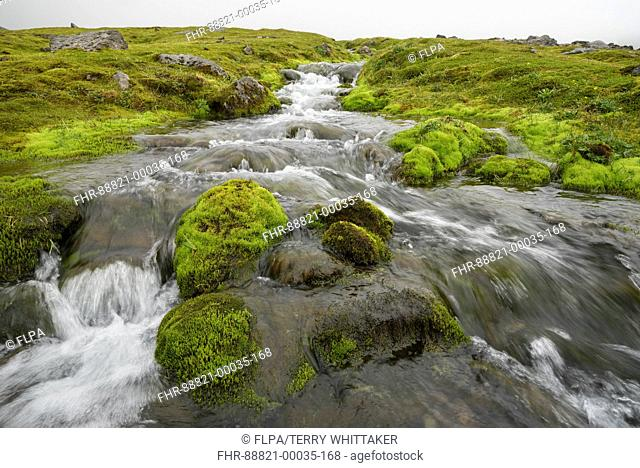 Hornvik, Hornstrandir, Iceland. July 2015
