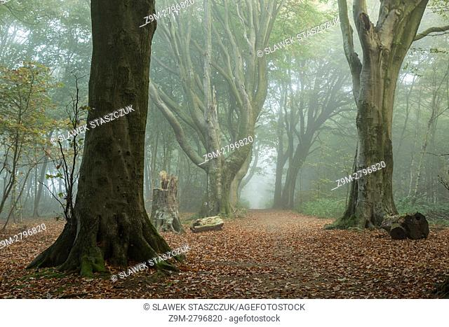 Misty autumn morning in Stanmer Park, South Downs National Park, East Sussex, England