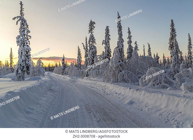 Winter landscape with a road in the forest at sundown with snowy trees and nice colors in the sky, Gällivare, Swedish Lapland, Sweden