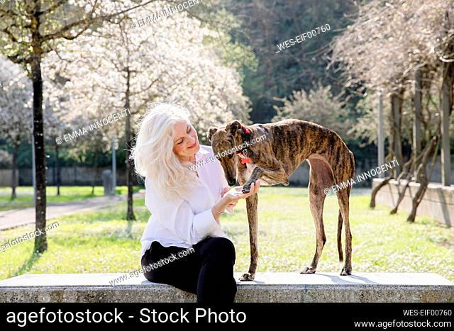 Smiling woman sitting with dog in public park