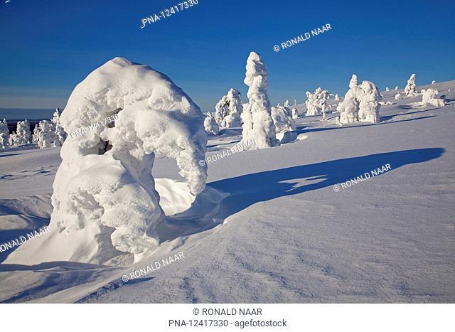 Snow sculpture around a frozen tree in Finnish Lapland