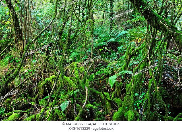 Broad-leaved forest  Galicia, Spain