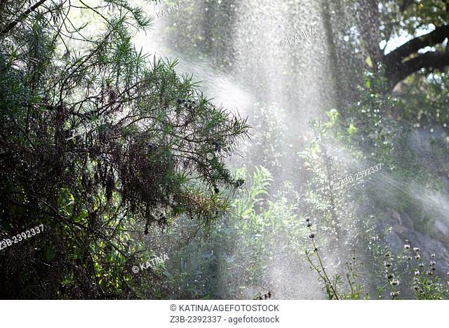 Sprinklers watering trees and plants in the morning sun in the Santa Barbara Botanic Garden; Santa Barbara; Santa Barbara County; California; CA; USA
