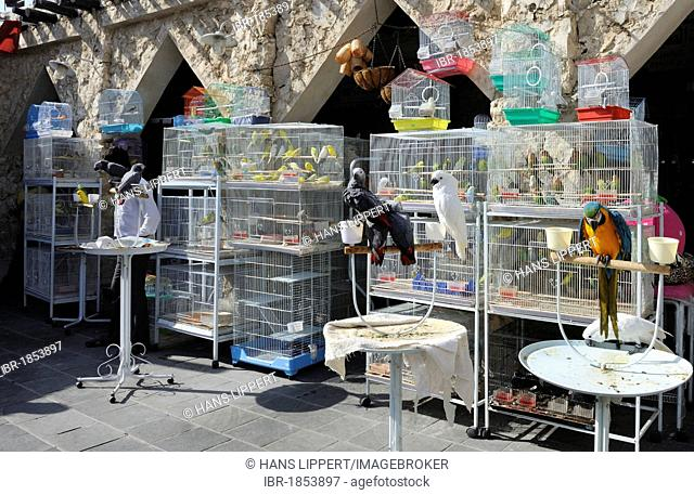Animal market in Souq al Waqif, the oldest souq or bazaar in the country, Doha, Qatar, Arabian Peninsula, Persian Gulf, Middle East, Asia