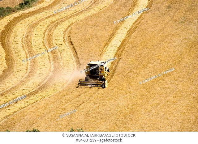 Harvesting cereals with reaper doing curves and lines Solsonès, Lleida, Catalonia, Spain, Europe