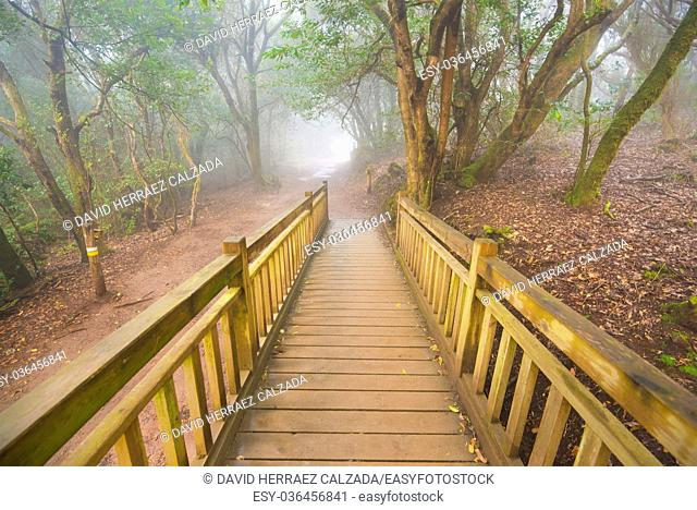 Foggy laurisilva forest in Anaga mountains, Tenerife, Canary island, Spain