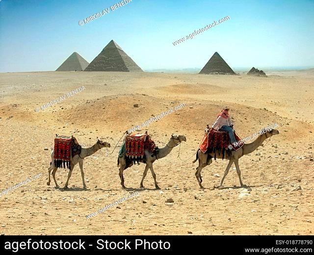 Three camel caravan going through the sand desert near pyramid in the Egypt - Ca