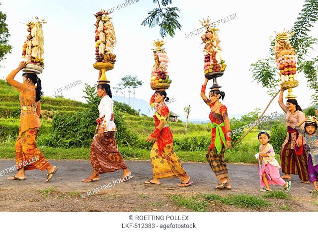 Women carrying offerings on their heads, Odalan temple festival, Gunung Agung in background, Iseh, Sidemen, Karangasem, Bali, Indonesia