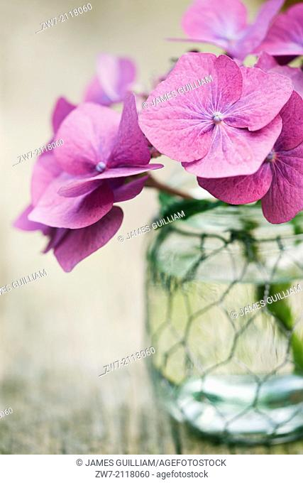 Hydrangea flower in a glass vase on a weathered wooden table