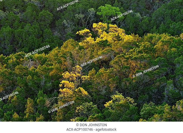 Overlooking suburban Austin Hill Country woodlands in spring, Austin, Texas, USA