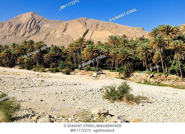 Dry wadi bed and date palm oasis, Hajar al Gharbi Mountains, Al Dhahirah region, Sultanate of Oman, Arabia, Middle East