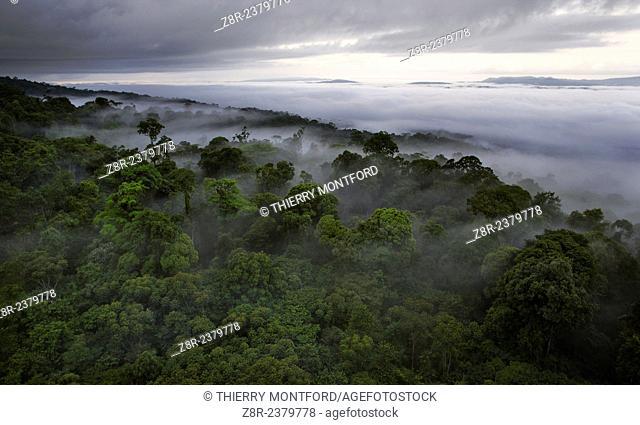 Canopy in the rain season. French Guiana