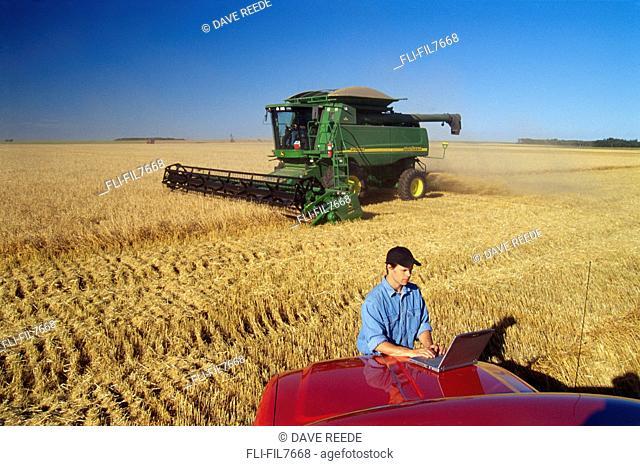 Farmer using Laptop in Wheat Field, Tiger Hills, Manitoba
