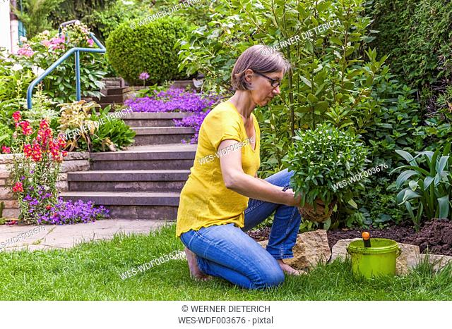 Woman planting marguerite in garden