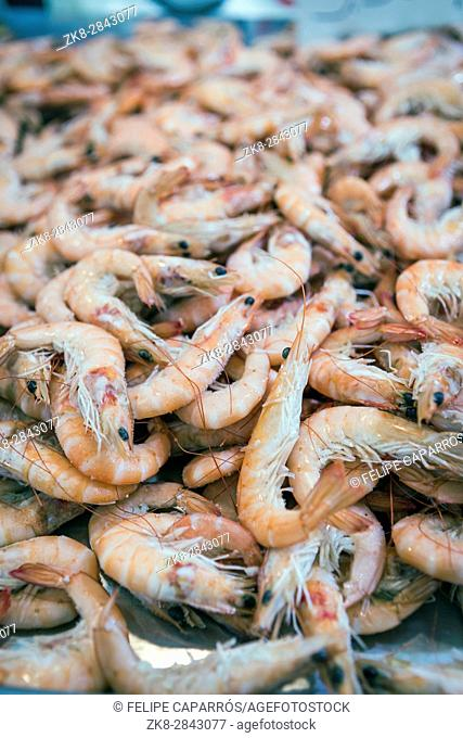 Bunch of Fresh shrimp on the local fish market in Cadiz, Spain