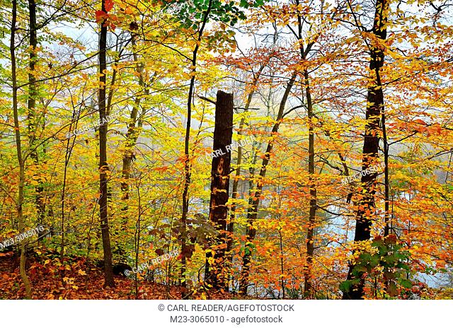 A wall of autumn color, Pennsylvania, USA
