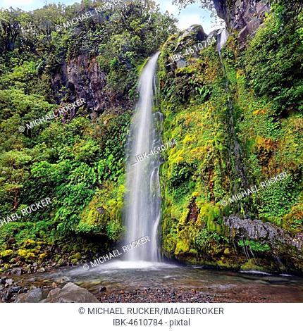 Dawson Falls waterfall in the middle of a tropical rainforest, Dawson Falls, Mount Taranaki or Mount Egmont, Whanganui National Park, North Island, New Zealand