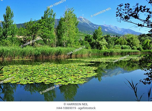 Switzerland, Valais, Sion, water lilies, flower, plant, swim, sheets, leaves, upholsterers, scene, green, blue, blossom, flourish, nymphaea, nymphaeae