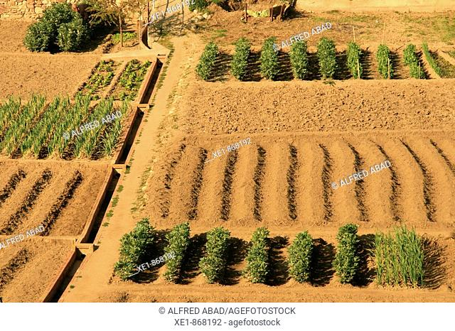 Kitchen gardens in winter. Caldes de Montbui, Barcelona province, Catalonia, Spain