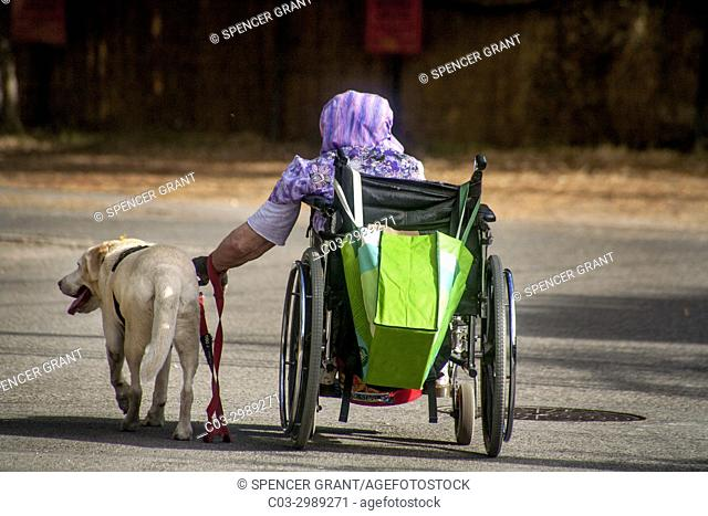 Confined to a wheelchair, a senior woman gets towed by her pet Labrador Retriever on a street in Laguna Beach, CA