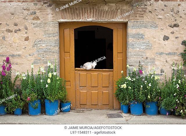 Cat in doorway, Villamayor del rio, Camino de Santiago