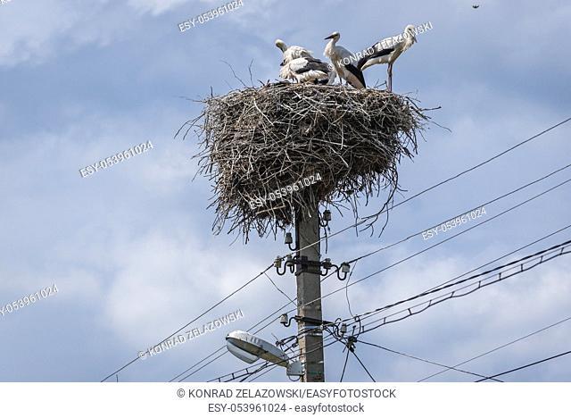 Storks nest in Stircea village (Polish Styrcza) in Glodeni District of Moldova