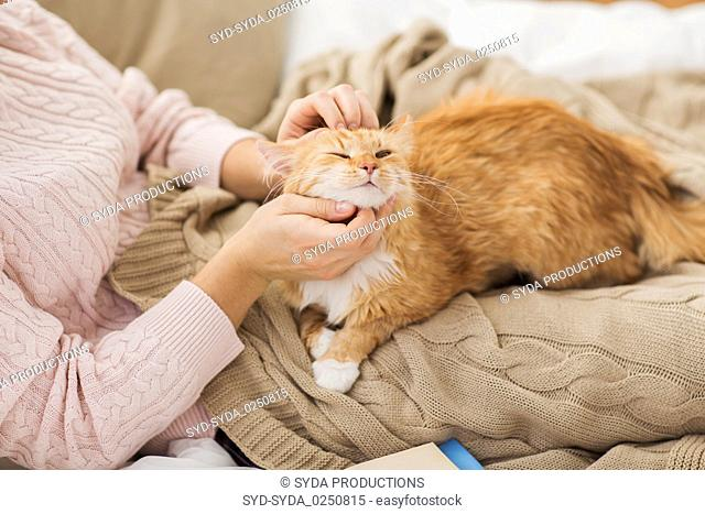 close up of owner stroking red cat in bed at home