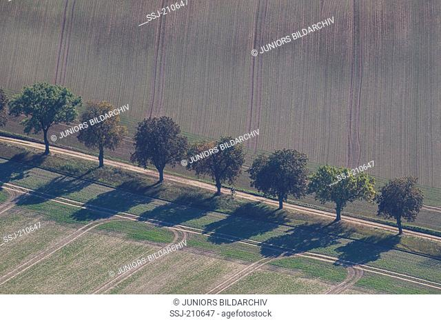 Allee with deciduous trees between fields, as seen from the air,.Germany, Mecklenburg-West Pomerania, Mueritz