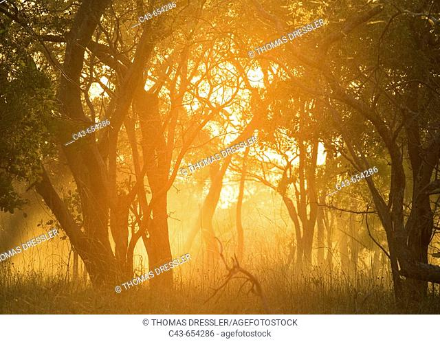 Zambia. Morning atmosphere with dust raised by a vehicle driving on a sandy track. Kafue National Park, Zambia