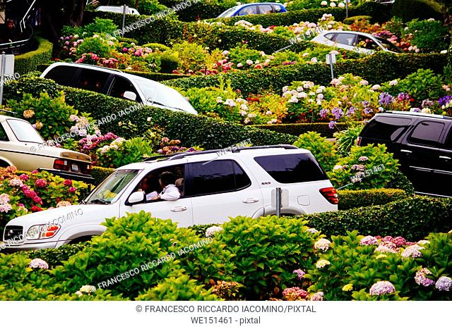 San Francisco, California, USA. view of the world famous Lombard Street with cars and curves